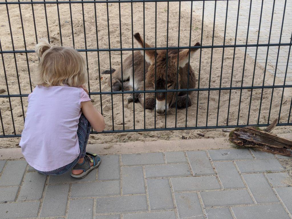 center parcs allgäu petting zoo