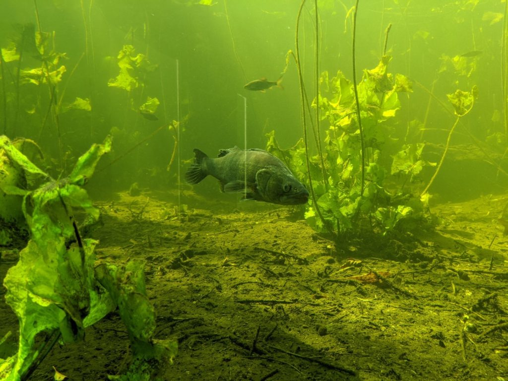 Wildgarten Fish Aquarium
