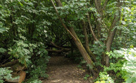 Bavarian Forest Wildgarten Furth im Wald