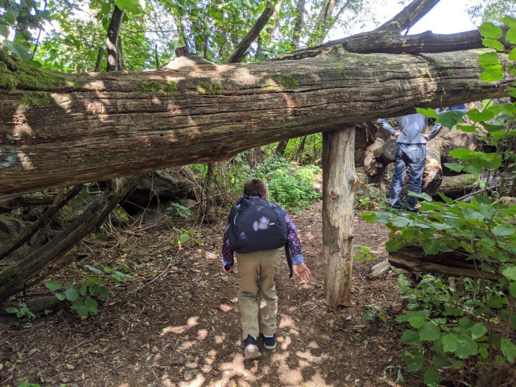 Hiking Bavaria Forest