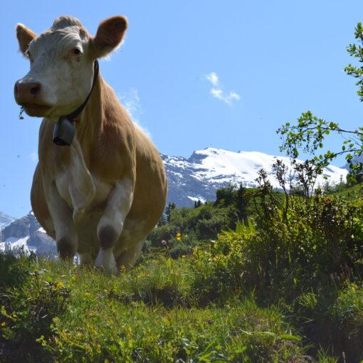 Getting To Grindelwald Switzerland